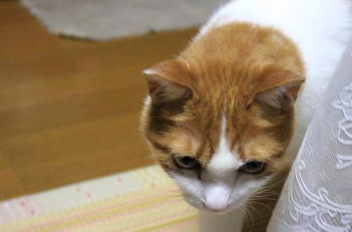 ブログNo.326(お出掛け前、お出掛け後の猫)4