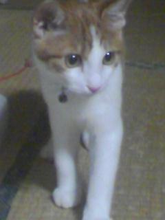 ブログNo.305(お蔵入り猫画像発掘第一弾)5