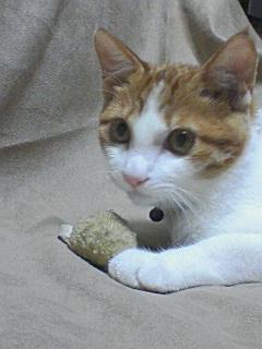 ブログNo.305(お蔵入り猫画像発掘第一弾)11
