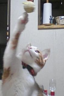 ブログNo.305(お蔵入り猫画像発掘第一弾)13
