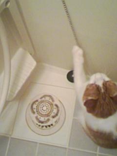 ブログNo.307(お蔵入り猫画像発掘!第三弾)7