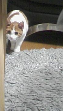ブログNo.308(お蔵入り猫画像発掘!第四弾)2