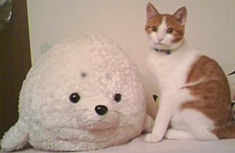 ブログNo.308(お蔵入り猫画像発掘!第四弾)3