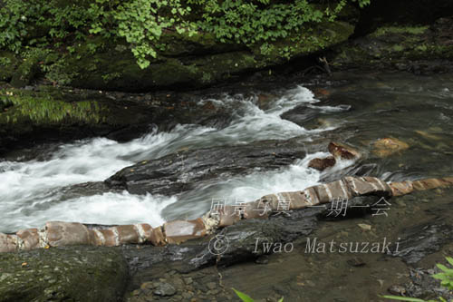 渓流の蛇石