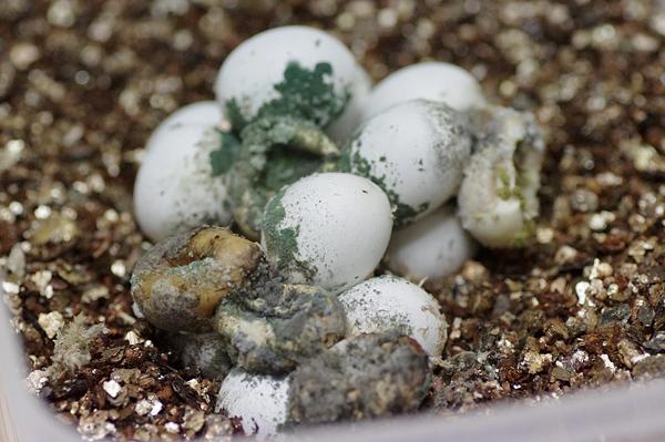 150721卵
