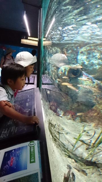 2015油壺水族館1