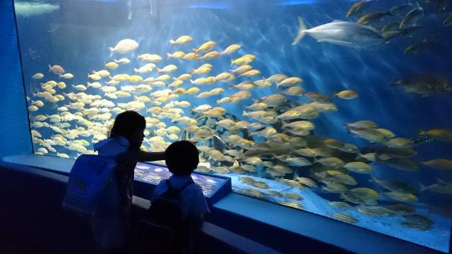 2015油壺水族館2