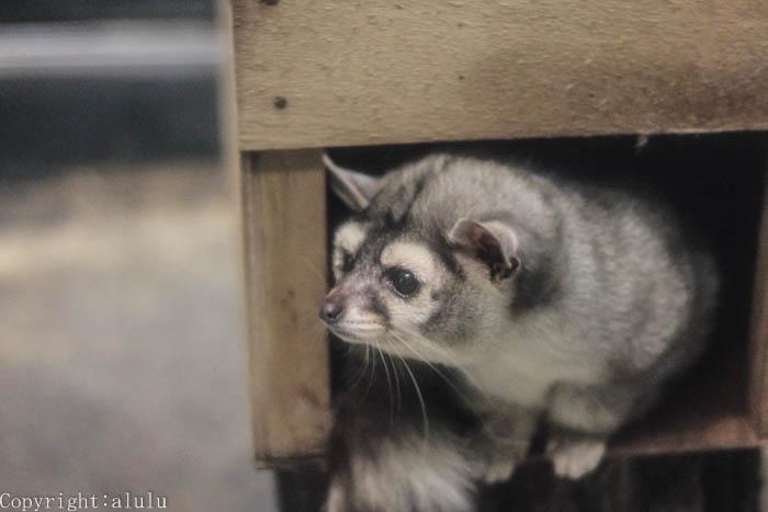 東山動物園 自然動物館 カコミスル