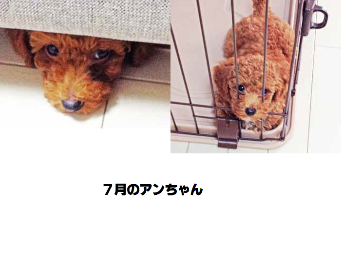 201506181750054ff.png