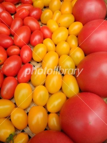 3758730 トマト