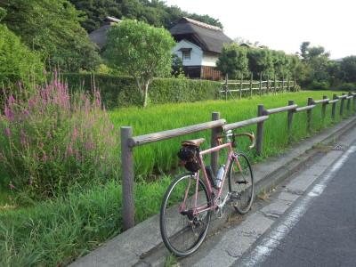 photo_derosa_sisigayahigurasi_2_2015_0731.jpg