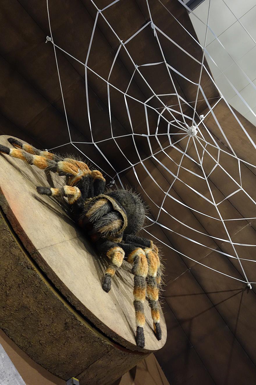 巨大昆虫 (7)