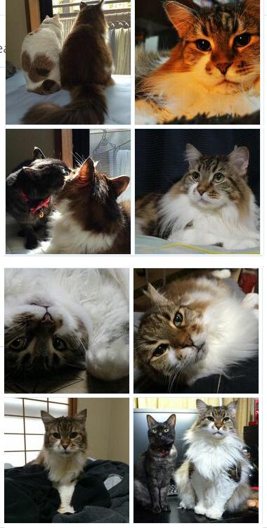 猫リングカスタム【じゃんまりーちゃん】