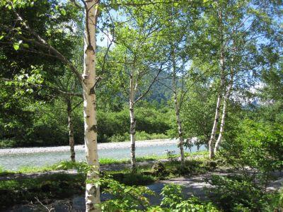 2015-07-10梓川と白樺