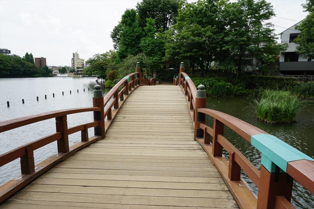 池月橋付近からの眺め_8