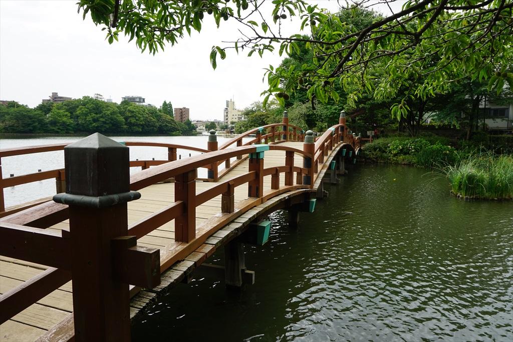 池月橋付近からの眺め_9