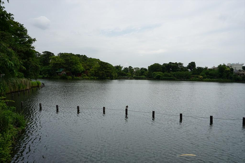 池月橋付近からの眺め_11