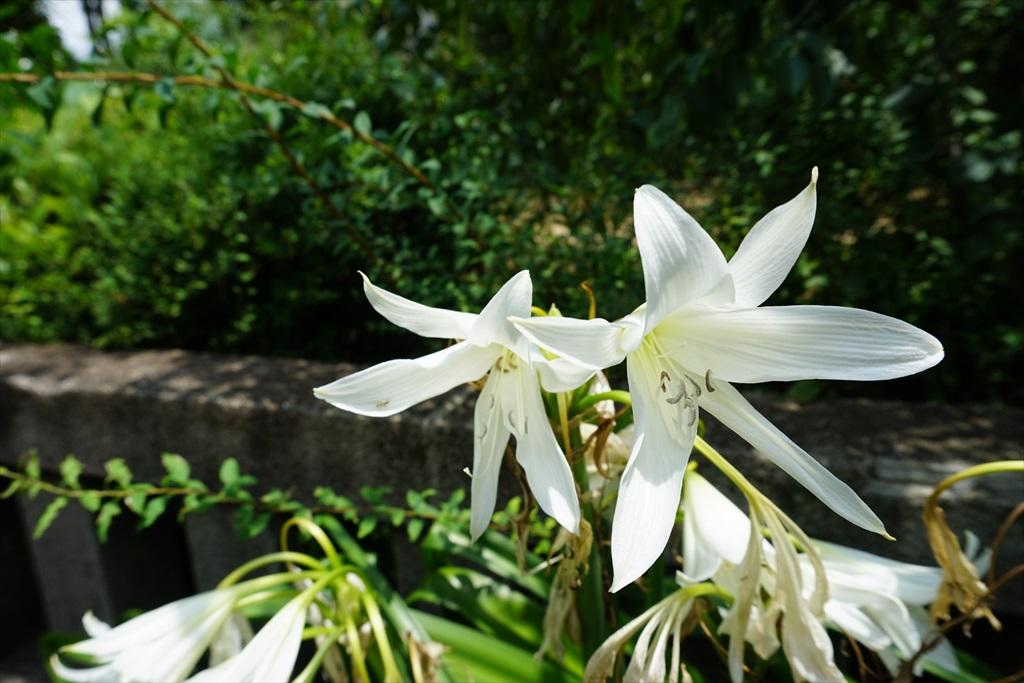 近くに咲いていた花_1