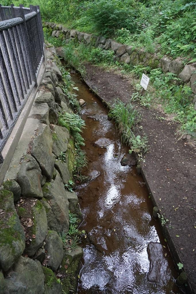 清水窪湧水を遡る_10