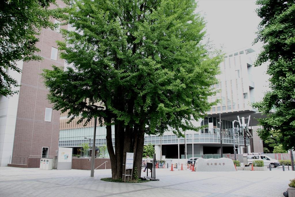 区役所の向かいは国士舘大学