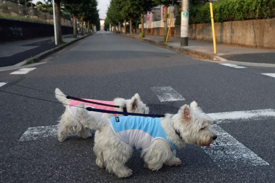 musinonakadeichibannsukina5.jpg