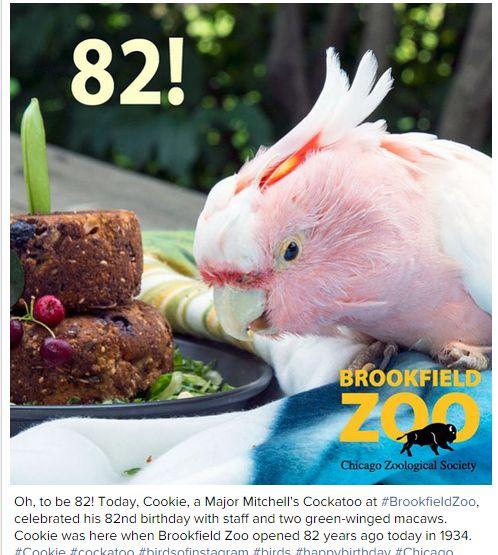 Cookie82.jpg