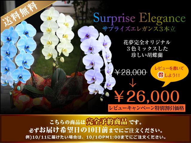 珍しい 胡蝶蘭
