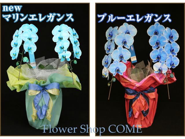 青 水色 胡蝶蘭