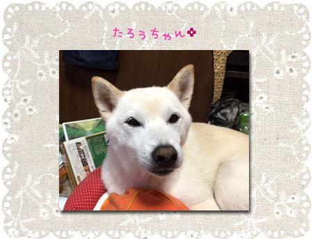 lovely-tarochan.jpg