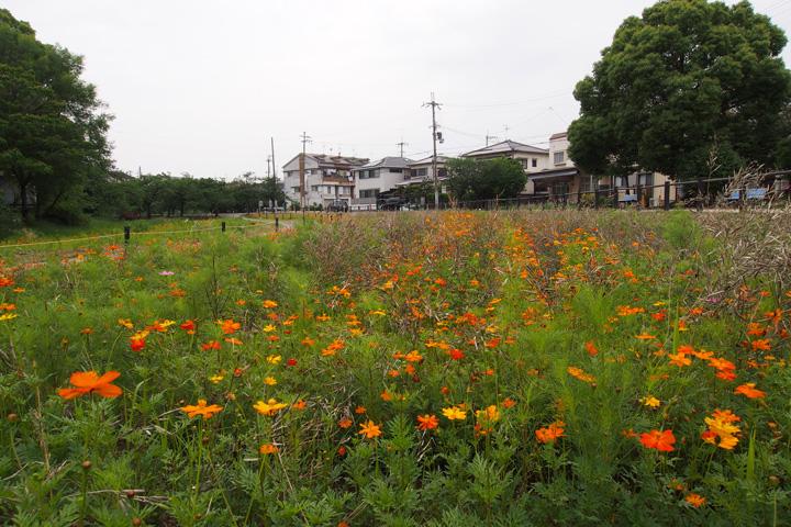 20150613_tsudo_shiroyama_kofun-03.jpg