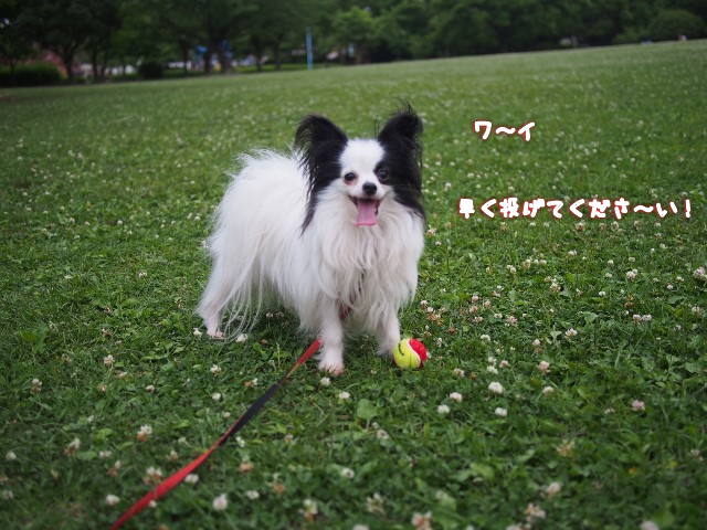 20150624005759788.png