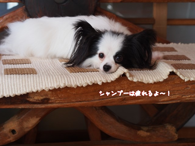 20150628020836b17.png