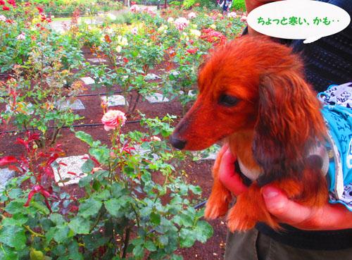 2015-05-yokohama41.jpg