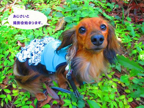 2015-06-azisai14.jpg