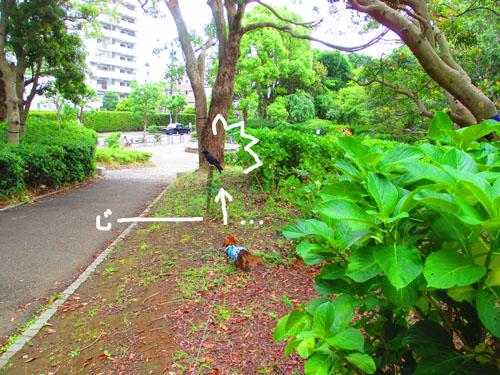 2015-06-azisai6.jpg