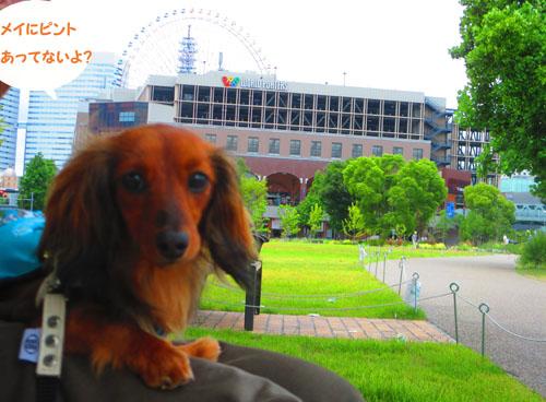 2015-06-yokohama10.jpg