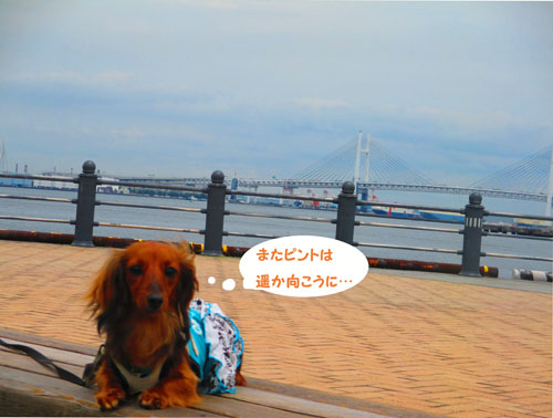 2015-06-yokohama22.jpg