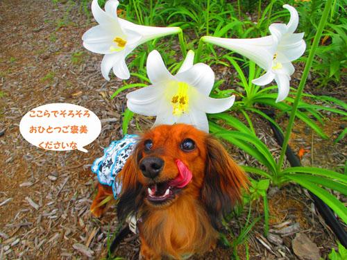 2015-06-yokohama7.jpg