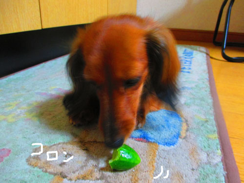 2015-07-cucumber10.jpg