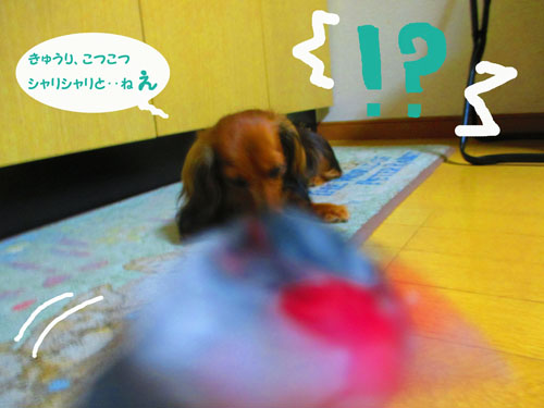 2015-07-cucumber12.jpg