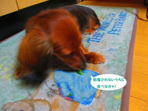 2015-07-cucumber13.jpg