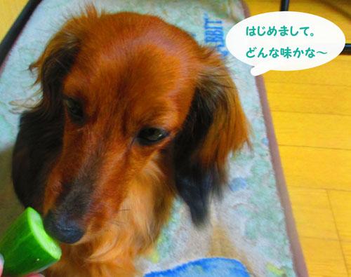2015-07-cucumber8.jpg