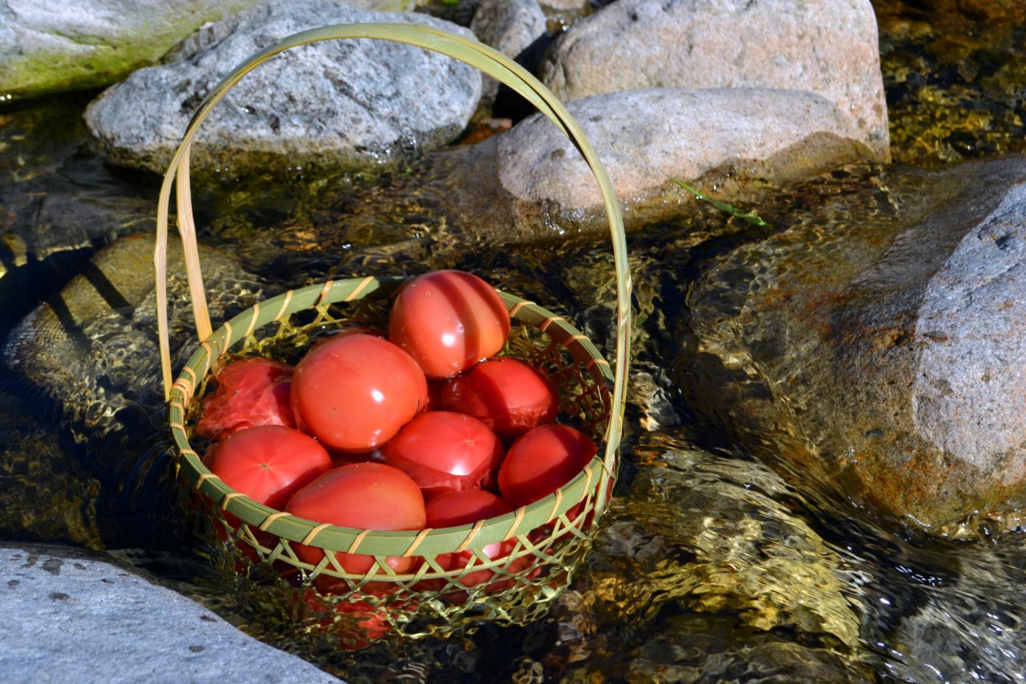 tomatobasket.jpg