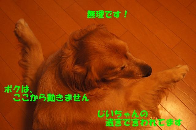DSC05970.jpg
