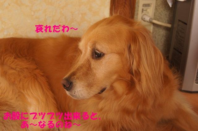 DSC05983.jpg