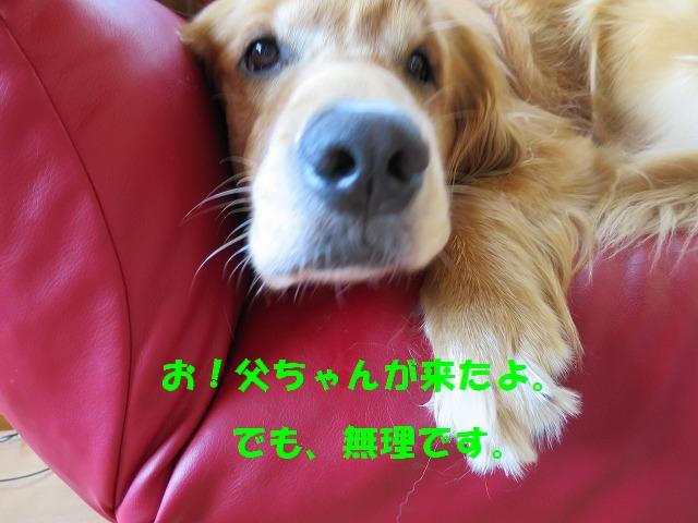 IMG_5154.jpg