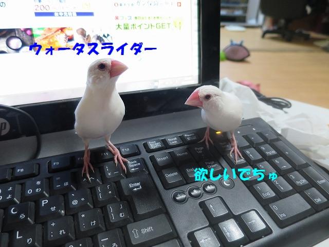 IMG_5720.jpg