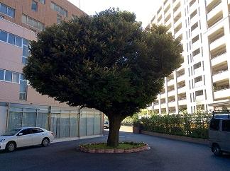この木が…