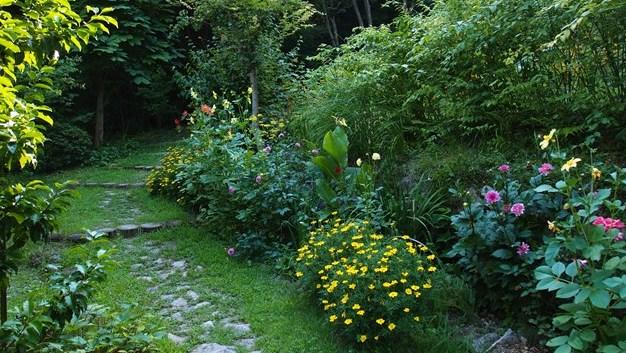 花壇その後