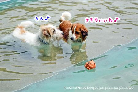150602_pool.jpg